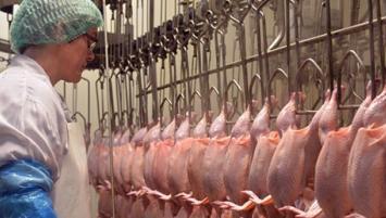 Le Groupe Le Duff choisit  Galliance,  le pôle Volaille du Groupe Coopératif Terrena pour approvisionner en viande de poulet ses  500 restaurants français