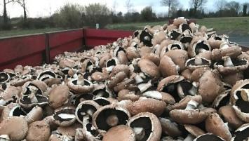 Ce sont près de 10 tonnes de champignons qui ont été jetées depuis le début des revendications,