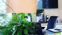 Lumipouss, la lampe végétale fabriquée en France, est née à Quimper.