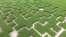 Les labyrinthes, sont agrémentés d'étapes ludiques et de jeux géants en bois adaptés à tous