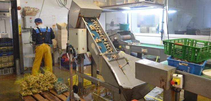 Shellfish, l'entreprise de mareyage, autrefois Les Viviers de Saint Malo, réalise 50% de ses approvisionnements au Royaume-Uni